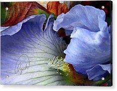 The Last Iris Acrylic Print