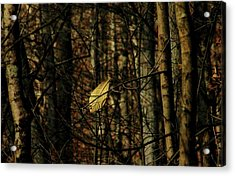 Acrylic Print featuring the photograph The Last Leaf by Bruce Patrick Smith