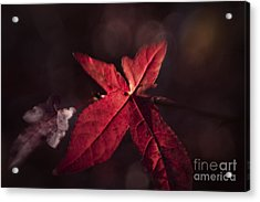 The Last Acrylic Print by Lisa McStamp