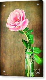 The Last One Rose Acrylic Print by Roberta Byram