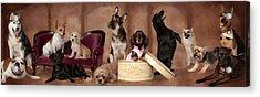 The Last Pupper Acrylic Print by Angel Pachkowski