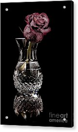 The Last Rose Acrylic Print