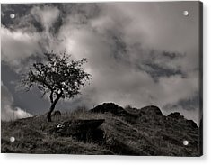 The Last Tree Acrylic Print by Sean Wareing