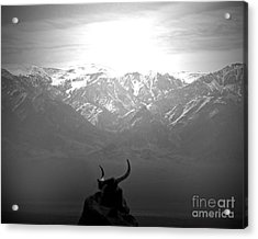 The Last Wild One Acrylic Print by Megan Chambers