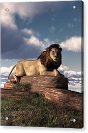 The Lazy Lion Acrylic Print by Daniel Eskridge
