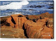The Lazy Lounging Seals Acrylic Print