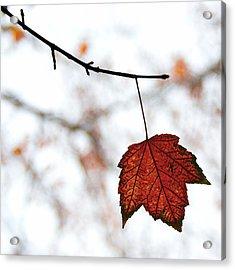 The Leaf Acrylic Print by Humboldt Street
