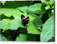 The Leaf Is My Plate Acrylic Print