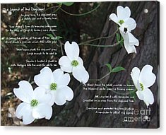 The Legend Of The Dogwood Acrylic Print