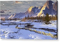 The Life Of Snow Acrylic Print