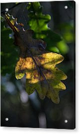 Acrylic Print featuring the photograph The Light Fell Softly by Odd Jeppesen
