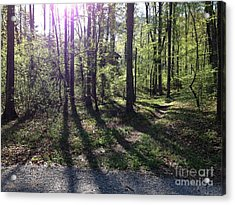 The Light In The East Acrylic Print by Janet Felts