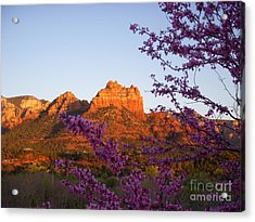 The Light Within Acrylic Print by Amy Strong