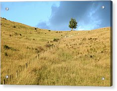 The Lines The Tree And The Hill Acrylic Print by Yoel Koskas
