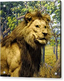 The Lion King Acrylic Print by Bill Cannon