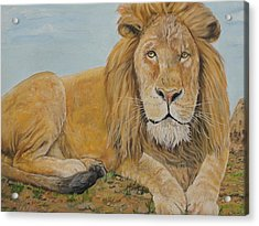The Lion Acrylic Print by Rajesh Chopra