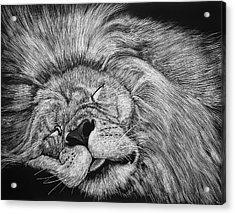 The Lion Sleeps Tonight Acrylic Print