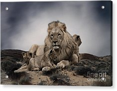 Acrylic Print featuring the photograph The Lions by Christine Sponchia