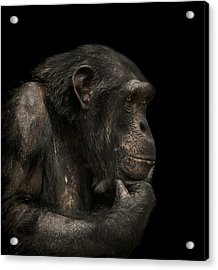 The Listener Acrylic Print by Paul Neville