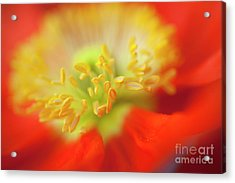 The Little Things Acrylic Print by Ron Hoggard