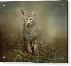The Littlest Pack Member Acrylic Print