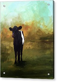 The Lone Beltie Acrylic Print by Cari Humphry