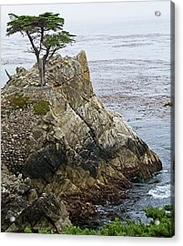 The Lone Cypress - California Acrylic Print by Brendan Reals