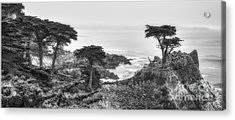 The Lone Cypress 2 Acrylic Print by Serge Chriqui