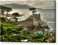 The Lone Cypress Carmel California Acrylic Print