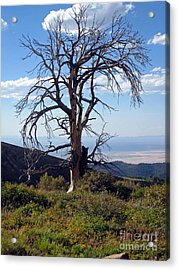 Acrylic Print featuring the photograph The Lone Tree by Juls Adams