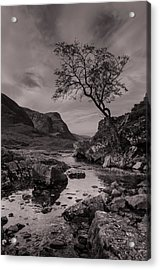The Lone Tree Of Glencoe Acrylic Print by Ben Spencer
