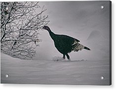 The Lone Turkey Acrylic Print