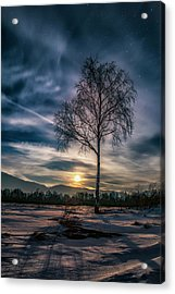 The Lonely Birch Acrylic Print