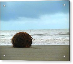 The Lonely Coconut Acrylic Print