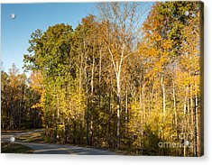 The Long And Winding Road - Natchez Trace Acrylic Print