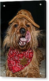 The Long Tongue Of The Law Acrylic Print by Norma Rowley