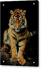 The Look Acrylic Print