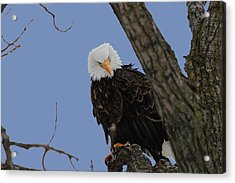 The Look Acrylic Print by Dave Clark