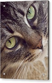 The Look Of Love Acrylic Print by Lynn Andrews