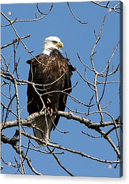 The Lookout Acrylic Print by Dave Clark