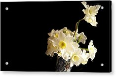The Lookout Scout Daffodil Acrylic Print by ARTography by Pamela Smale Williams