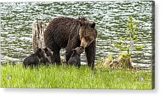 The Love Of Mama Bear Acrylic Print