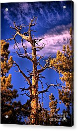 The Lurker Acrylic Print by Charles Dobbs