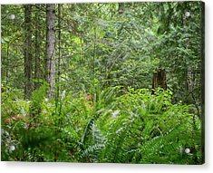 The Lush Forest Acrylic Print