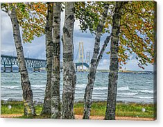 The Mackinaw Bridge By The Straits Of Mackinac In Autumn With Birch Trees Acrylic Print