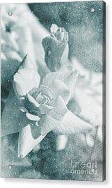 The Magic Of Roses Acrylic Print by Linda Lees