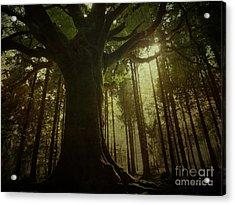 The Magical Beech Acrylic Print