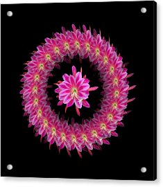 The Mandala Of Pink Tropical Flower Acrylic Print by Jacqueline Migell