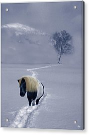 The Mane And The Mountain Acrylic Print by Wayne King