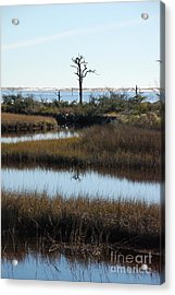 The Marsh Acrylic Print